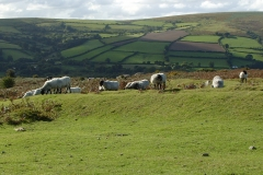 Widecombe Hill 5
