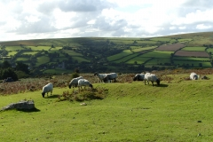 Widecombe Hill 6